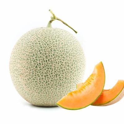 FIBERGLASS FRUIT CANTALOUPE